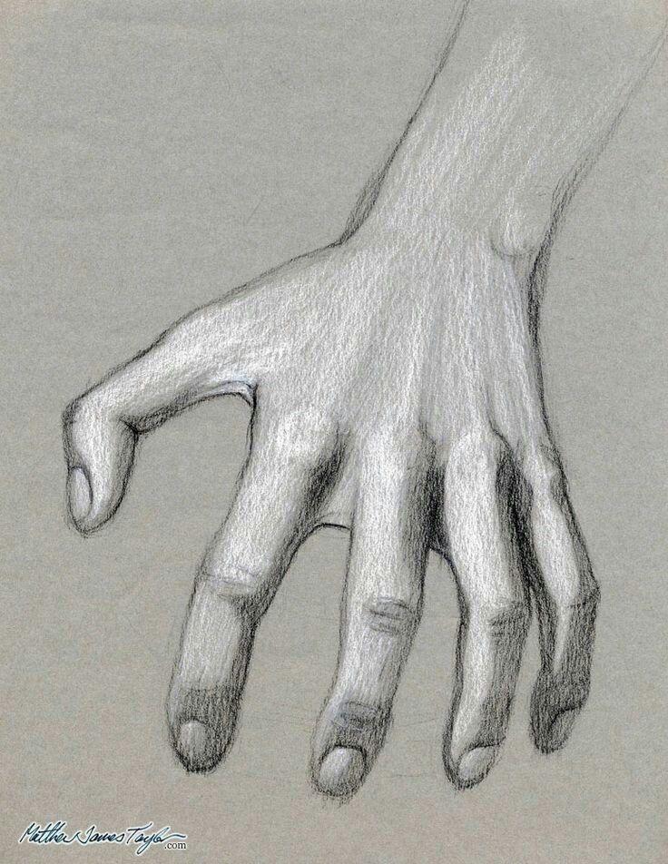 Pencil rendering | Human anatomy drawing, Anatomy drawing ...