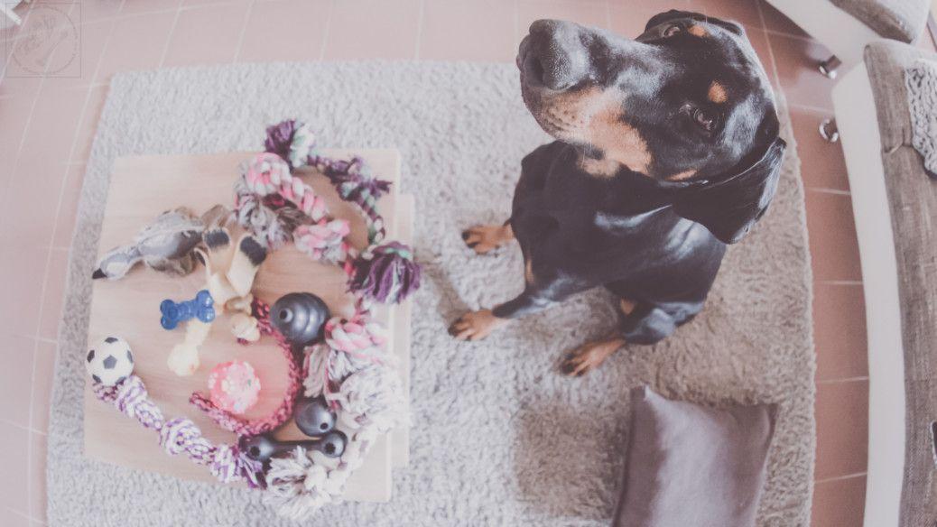 Spielspass Mit Gefahrlichen Folgen Pfoten Weg Midoggy Community Spiele Pfoten Hunde Spiele