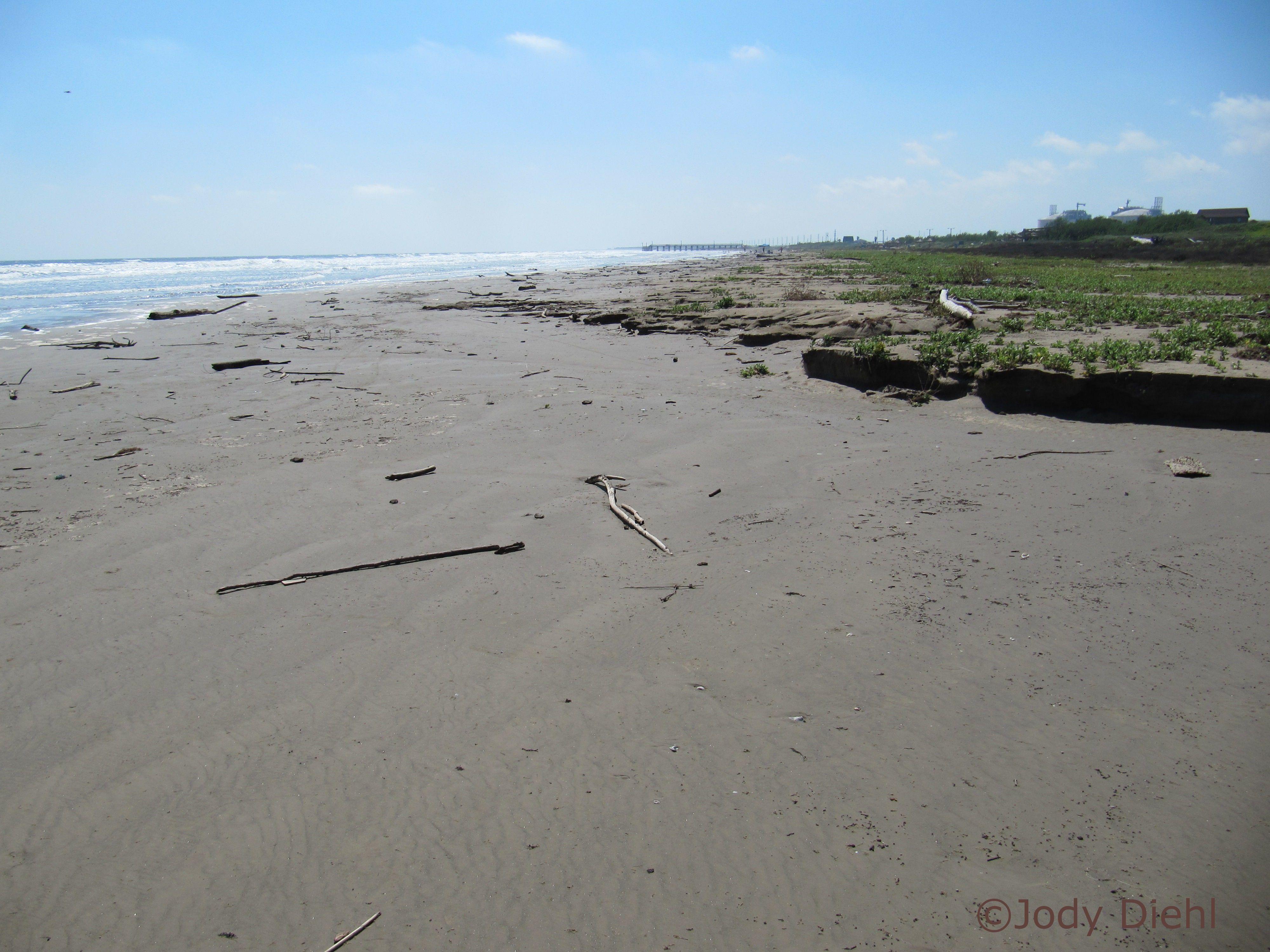 Beachcombing On Texas Gulf Coast