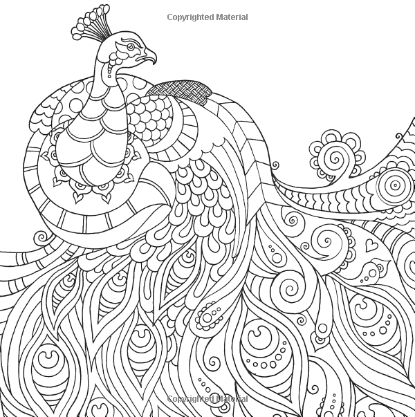 peacock Wildlife Coloring pages colouring adult detailed