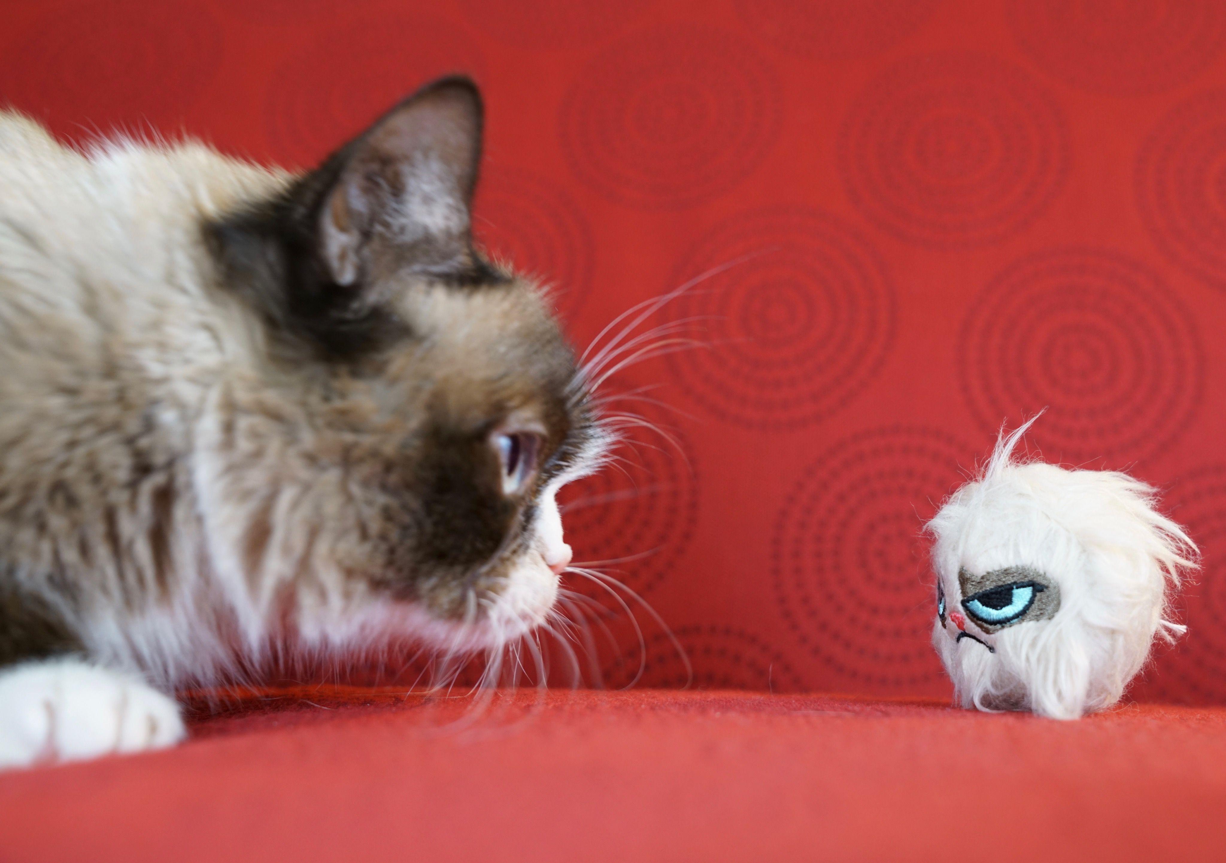 Pin by Dee Repka on gracelyn wants a hamster Cute baby