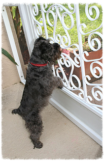Protect Your Screen Door From Pets All Weather Door And