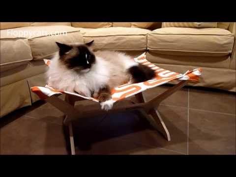 Peach Industries Kitty Lounger The Ultimate Cat Hammock Review Cat Hammock Ragdoll Cat Great Cat