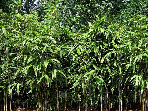 Bambushecken für Sichtschutz, Windschutz und Privatsphäre