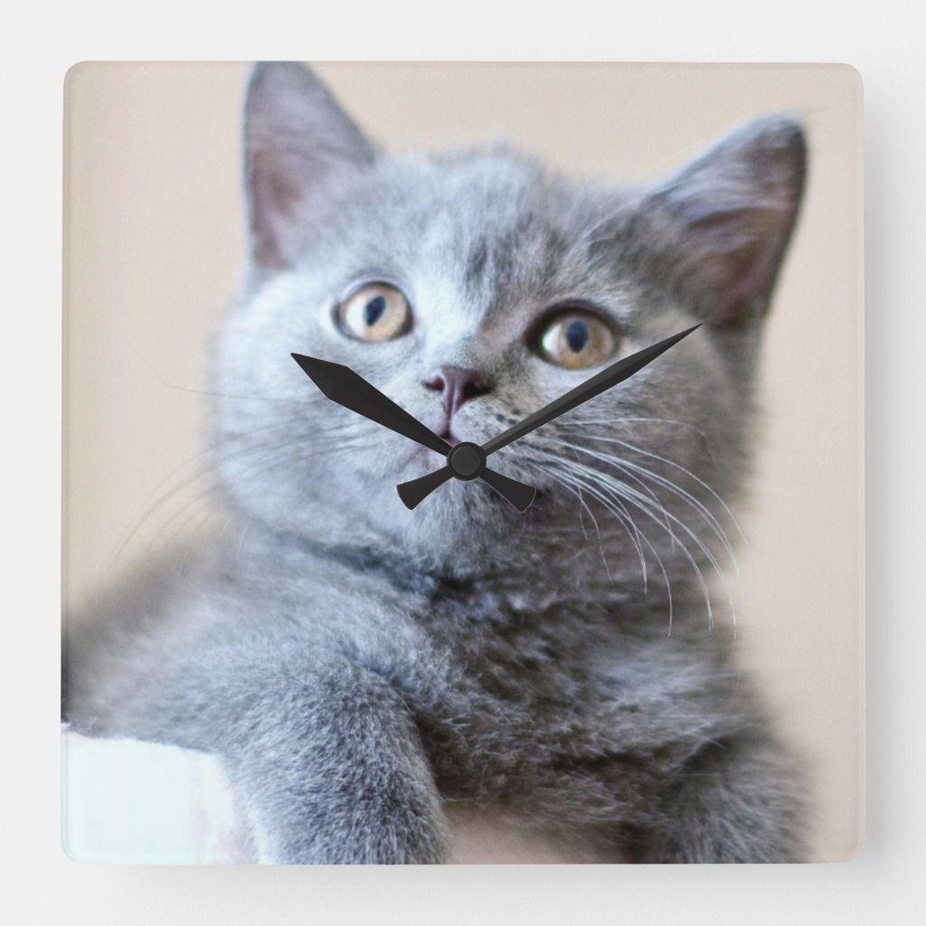 Gray British Shorthair Cat Square Wall Clock Zazzle Com British Shorthair Cat Love Cats