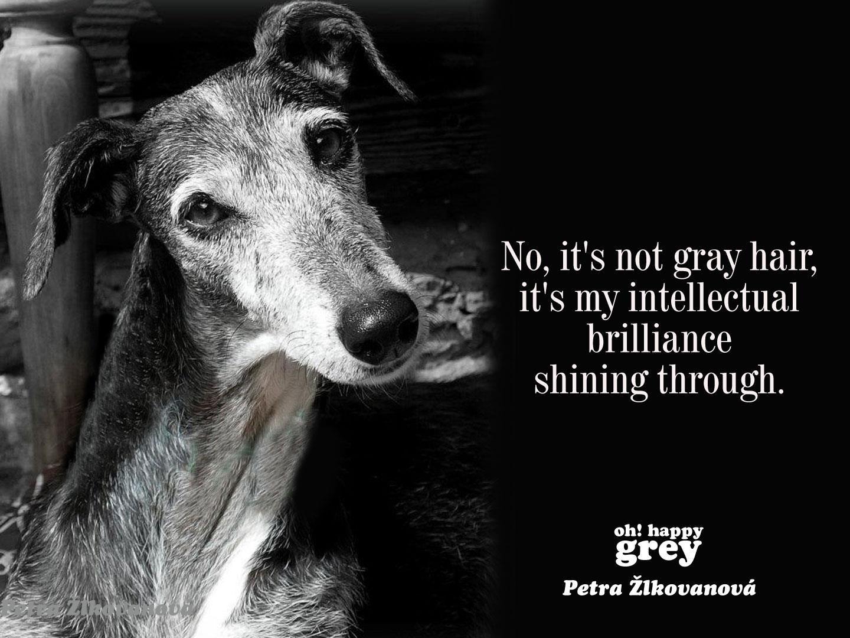 ~ Greyhound love ~