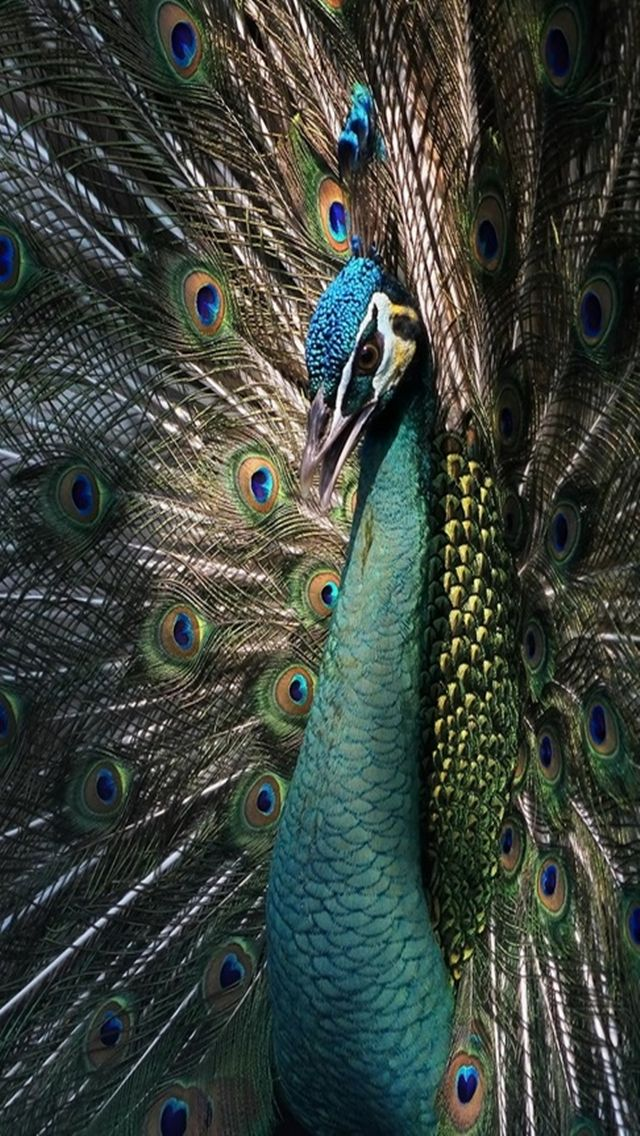 Tap image for more iPhone animal wallpaper! Beautiful
