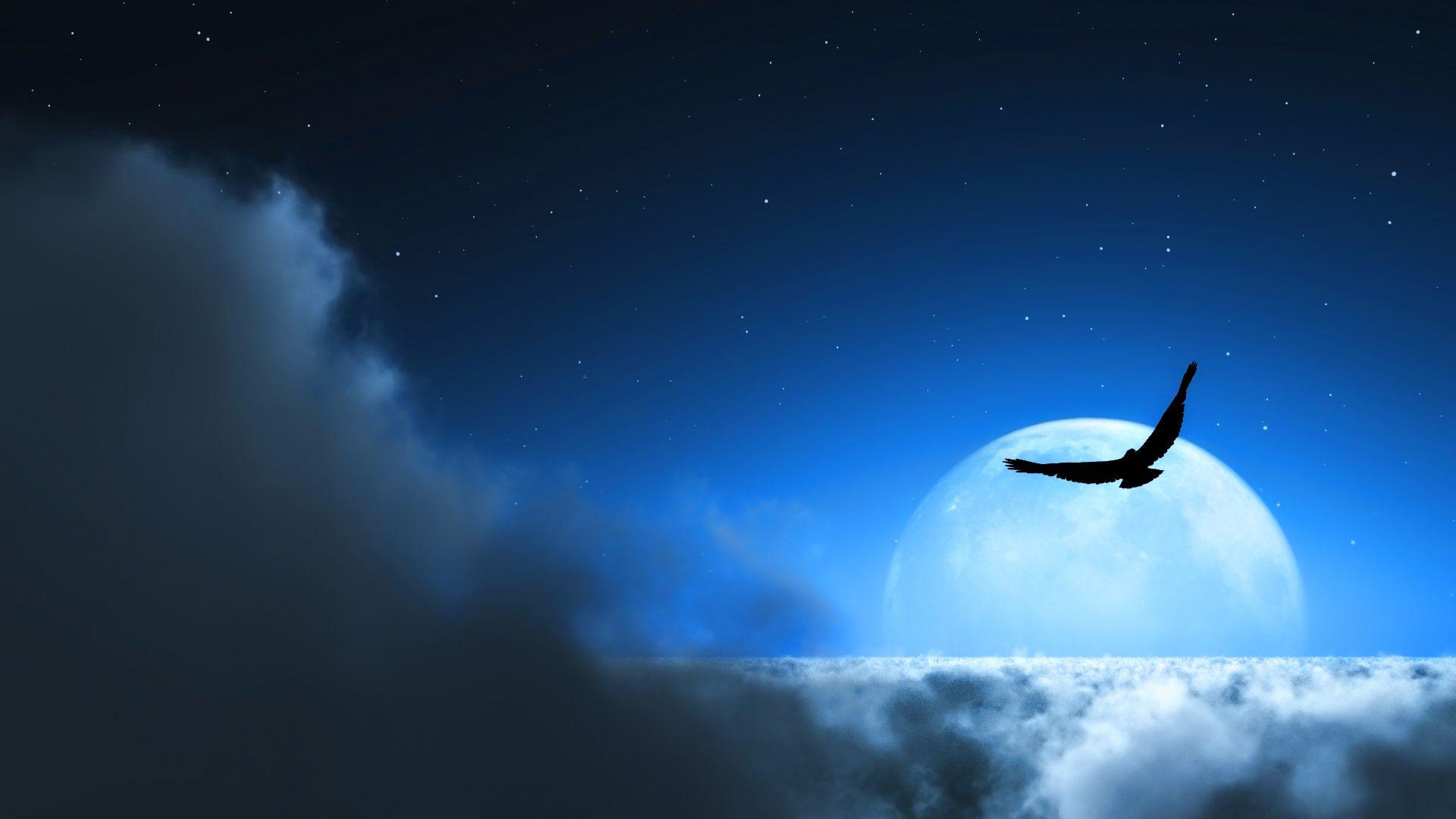 Wallpapers Night Sky Bird 1920x1080 Картины с