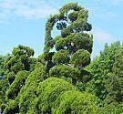 Photo of Fünf üppige Winterpflanzgefäße, die bis zum Frühjahr reichen. Refined Container Gard, …