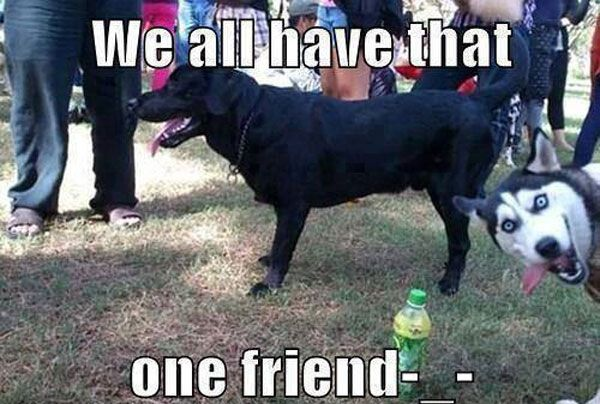 Epic Husky Photobomb Funny Dog Captions Funny Animals With