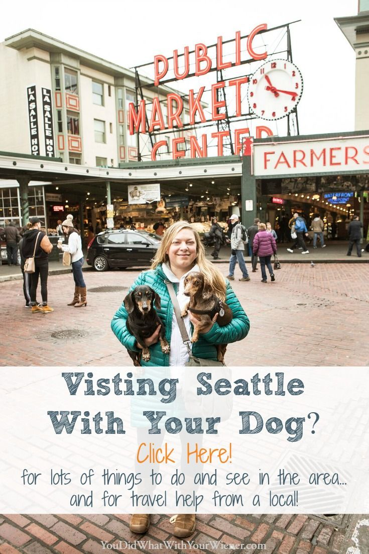 Planning A Trip To Seattle With Your Dog Training Your Dog Dog