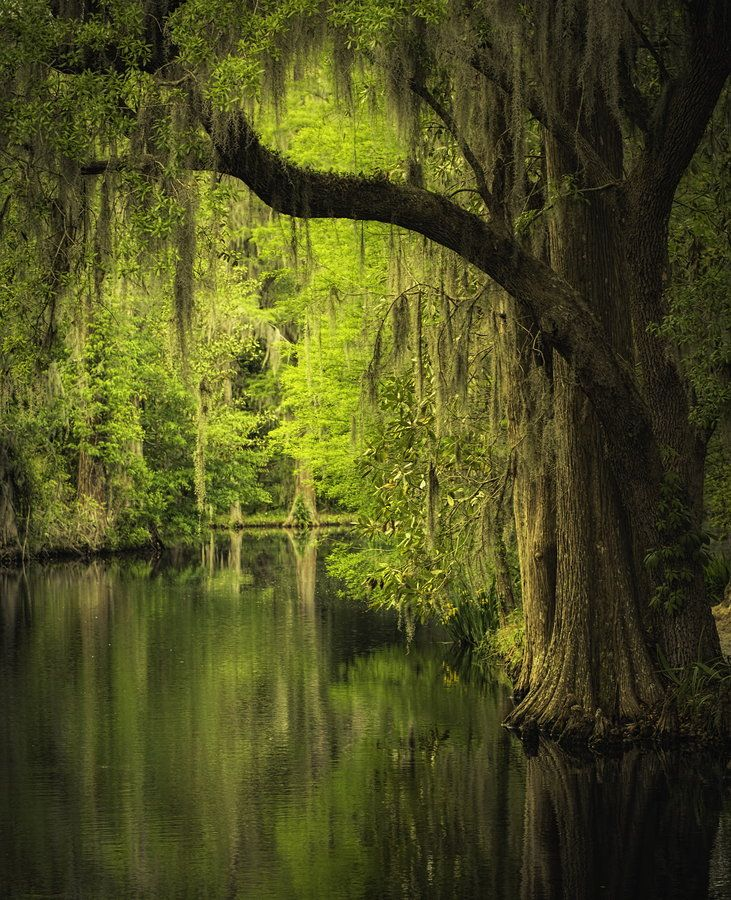 This is one that I can check off my bucket list.  I used to live very close to here.  Beautiful and eerie.  Magnolia Gardens, Charleston, SC