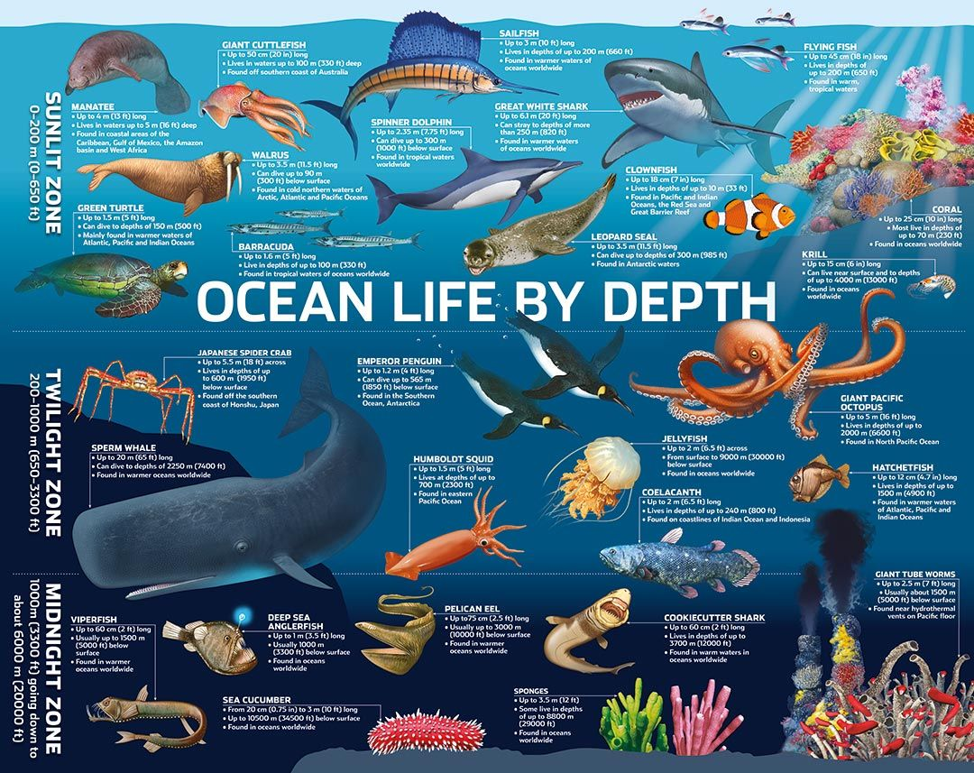Ocean Zones Feet Yahoo Image Search Results Ocean Activities Preschool Ocean Activities Kindergarten Ocean Activities