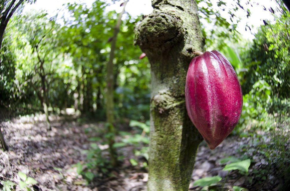 Herbal Treatment For Lipoma Amazon Rainforest Herbal Treatment