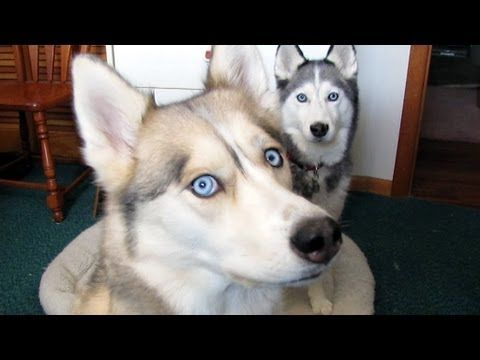 These Are Things The All Dog People Say Dog People Husky Owner