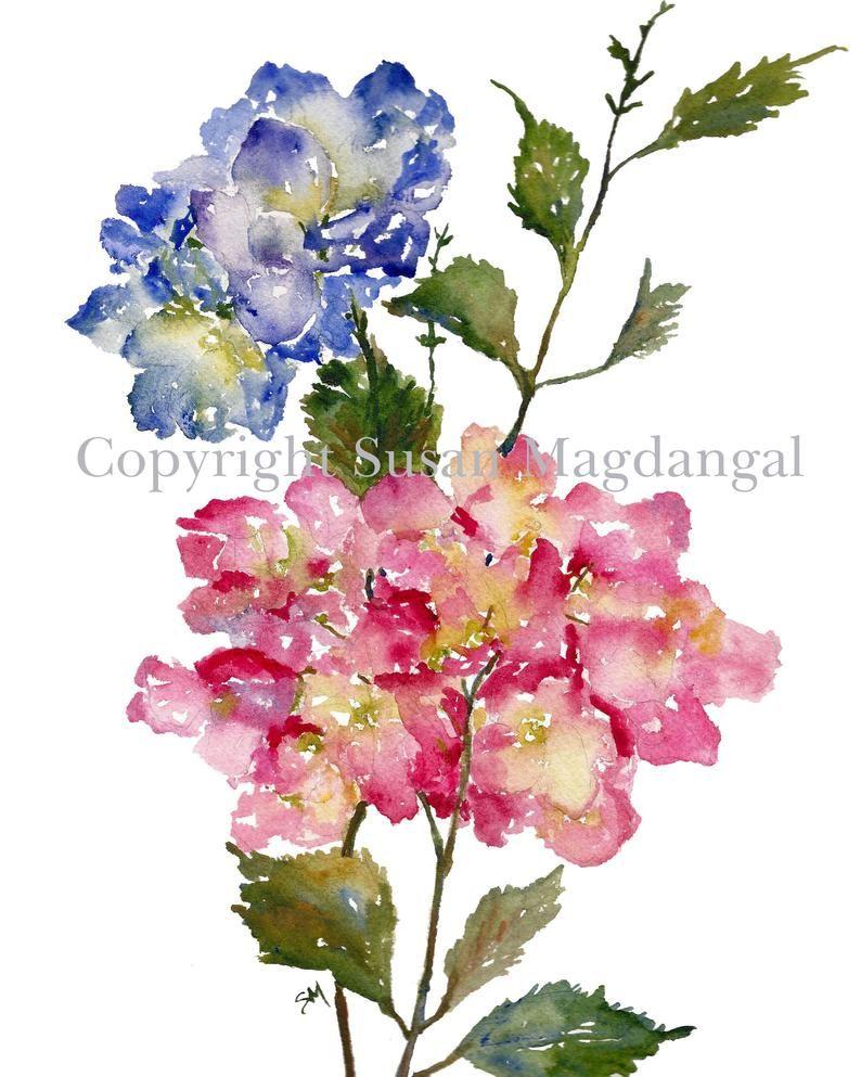 Aquarelle D Hortensia Fine Art Print Aquarelle Fleurs