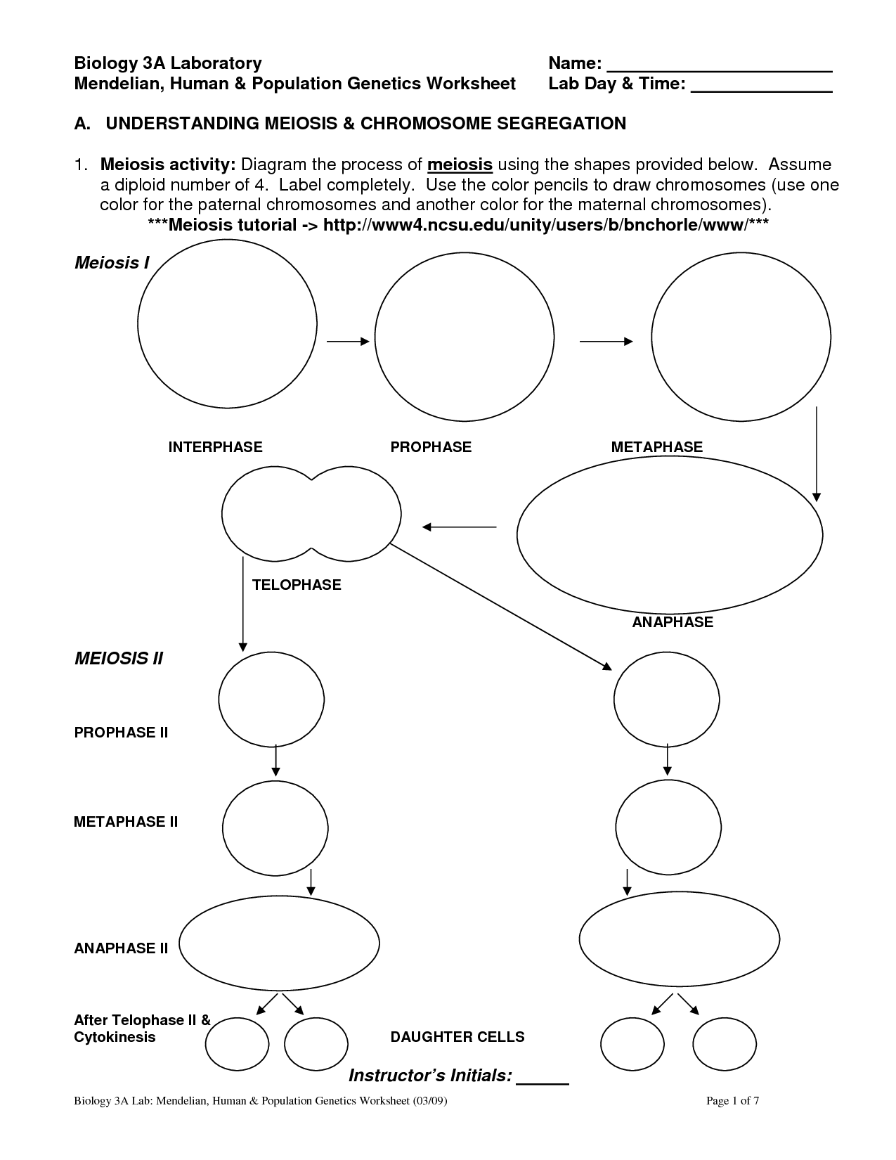 Meiosis Coloring Worksheet