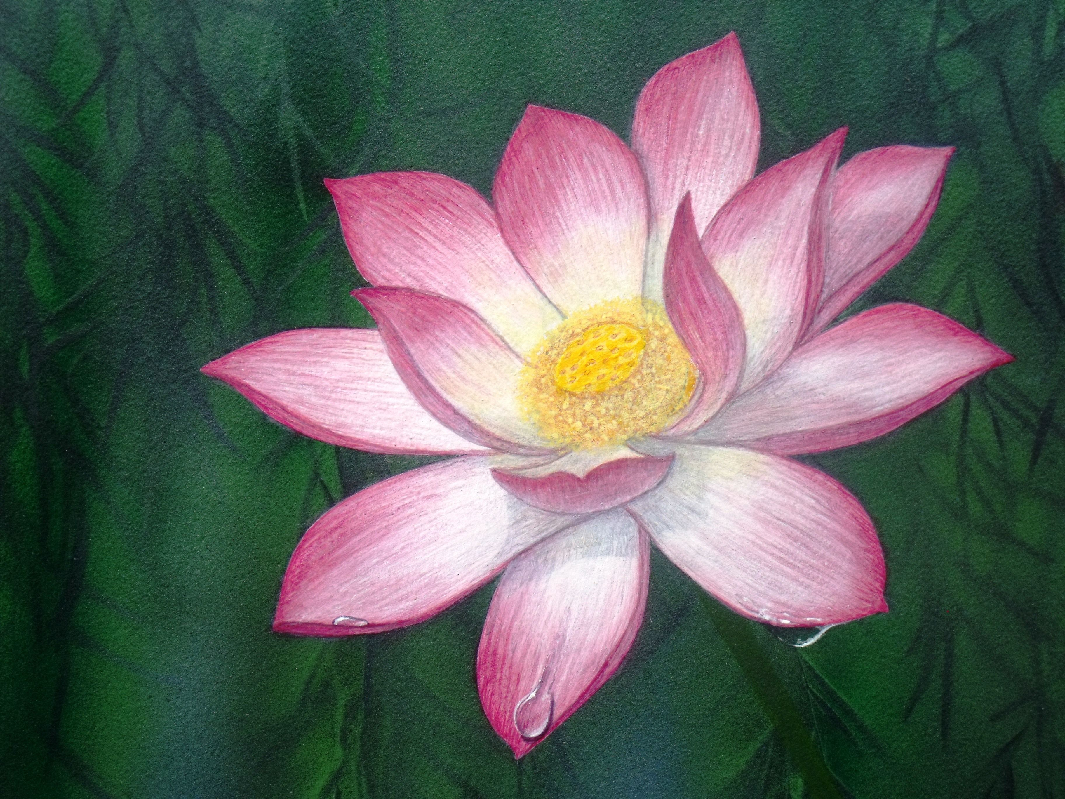 Last Bing Queries Pictures For Lotus Flower Acrylic Painting