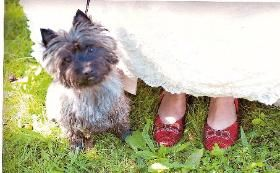 Cairn Terriers From Mystery Cairn In Lakeville Ma Cairn Terrier