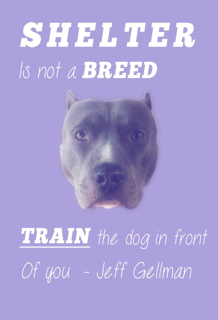 Shelter Dogs Are Not A Breed If You Ve Adopted A Shelter Dog