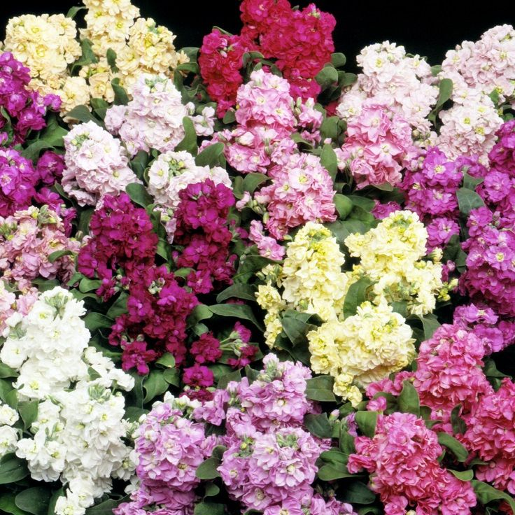 Top 10 Wonderful Flowers That Bloom All Year Long Inspired