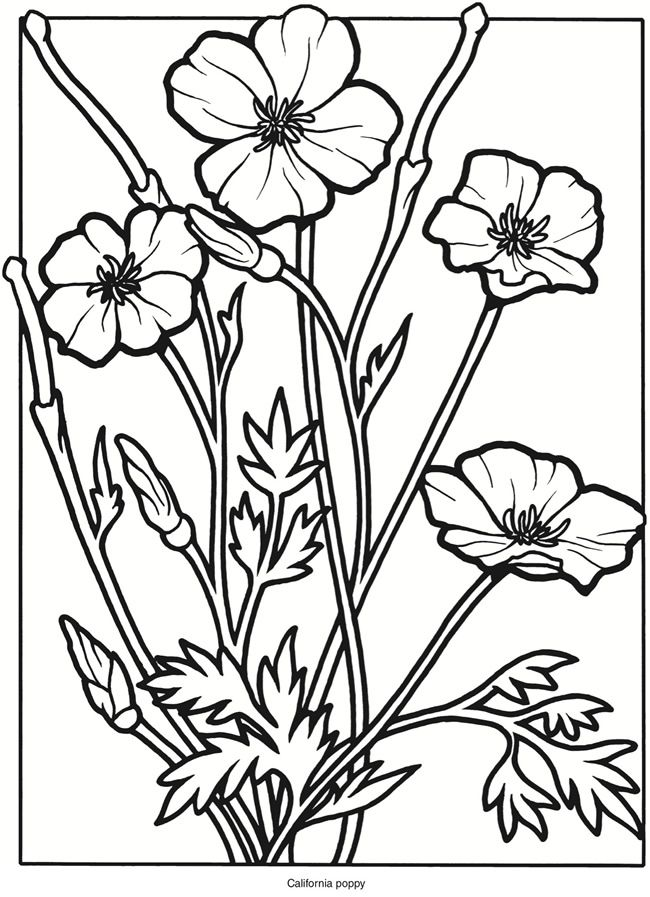 Creative Haven Wildflowers Stained Glass Coloring Book Poppy