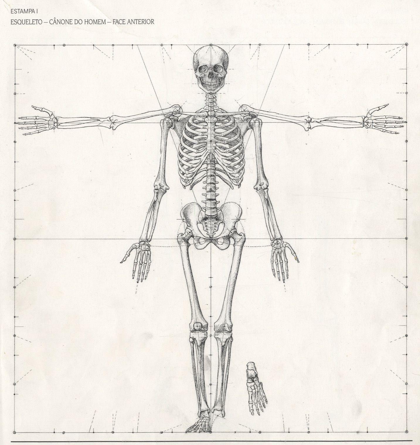 Desenhos De Apoio Visualizacao Do Esqueleto Desenhos Anatomia