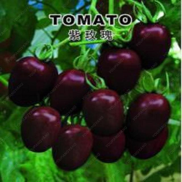 Tomato Climbing Bonsai Vegetable Plants 100 Seeds In 2020 400 x 300