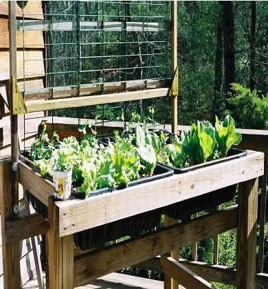 17 Best 1000 images about garden on Pinterest Gardens Raised beds