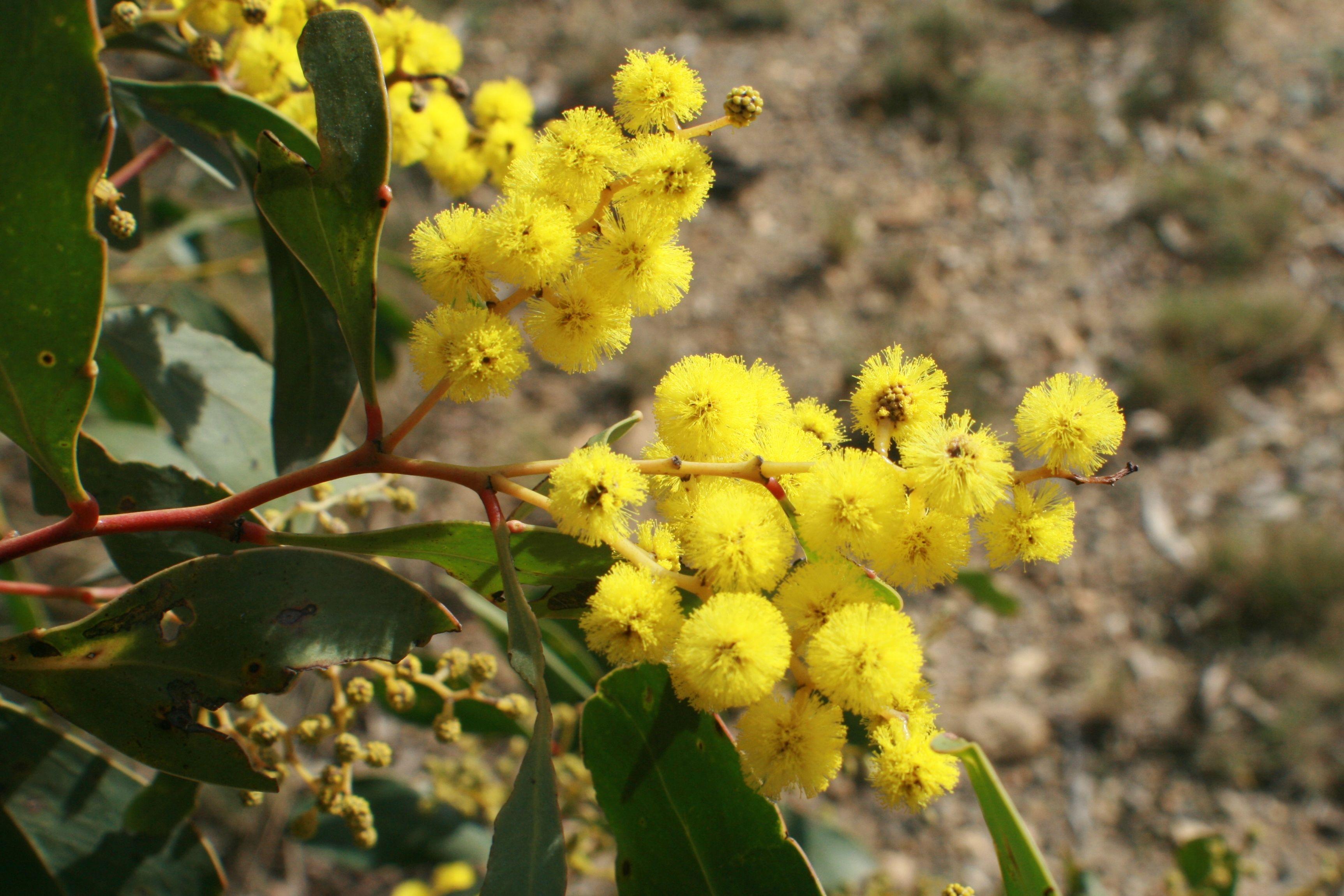 Pin On Indringerplante Suid Afrika