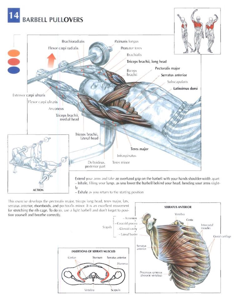 Barbell pullovers | Training Anatomy (Chest) | Pinterest | Workout ...