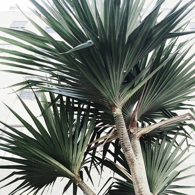 Palm Trees // viennawedekind.com