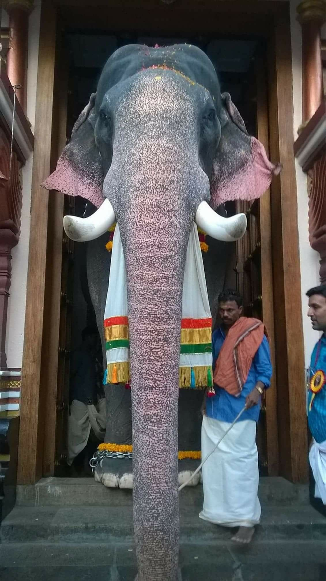 Pin On Asian Elephant Abuse Torture