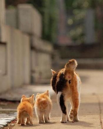 cat and kitties, lol from behind so cute!!!