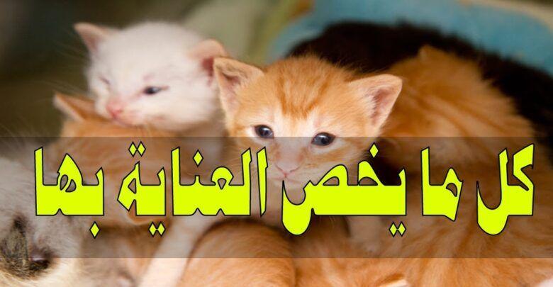 تربية القطط الصغيرة في المنزل 3 طرق ستسهل عليك تربية القطط Pets