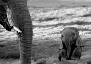 baby elephant in thought