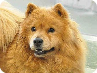 Pin By Casey On Dog Dogs Pets Spitz Breeds