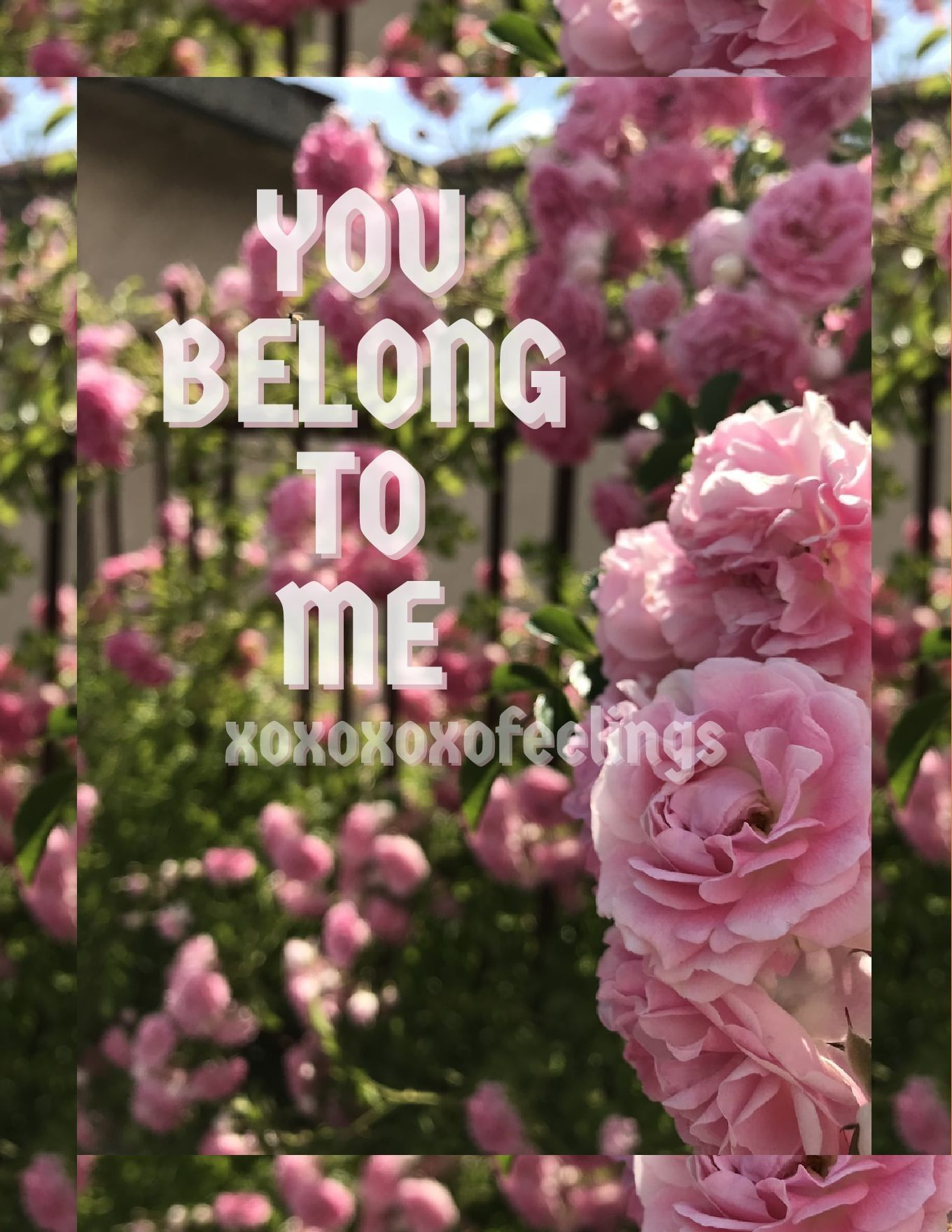 Love Rose Feelings Couple Romantic Relationship Quotes