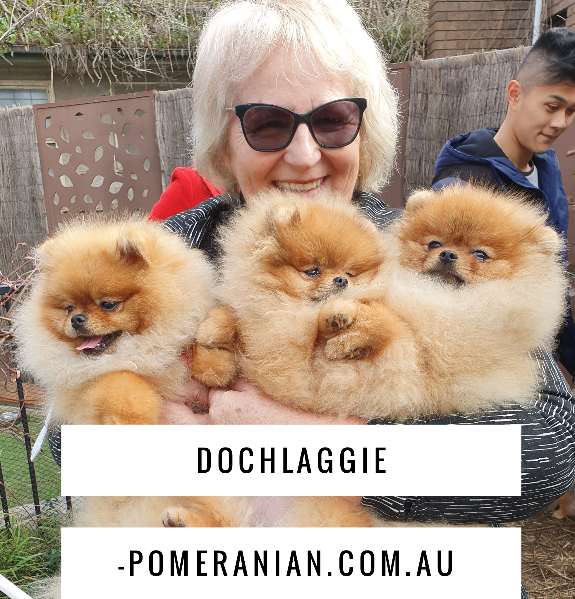 Dochlaggie Pomeranians Melbourne Australia In 2020 Pomeranian Puppy Puppies Pomeranian
