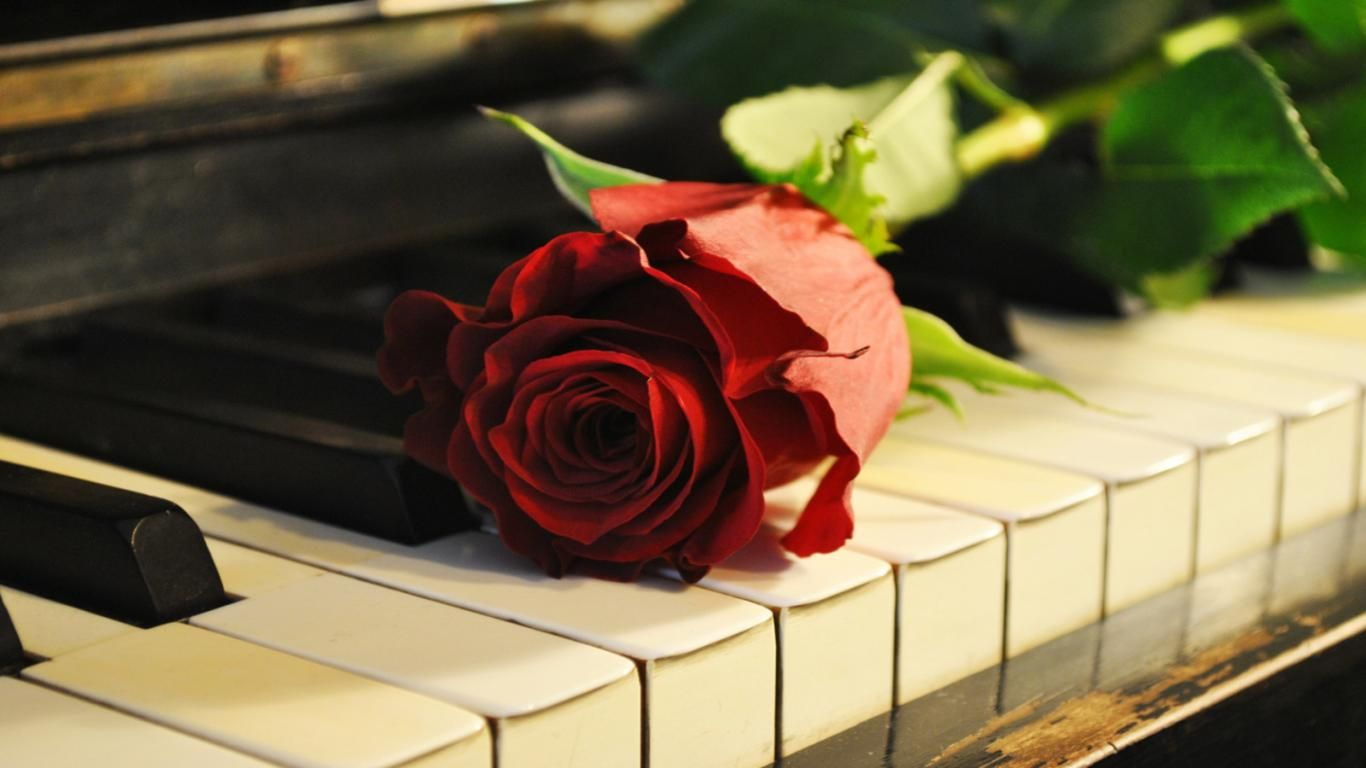 Grand Piano Wallpaper With Rose
