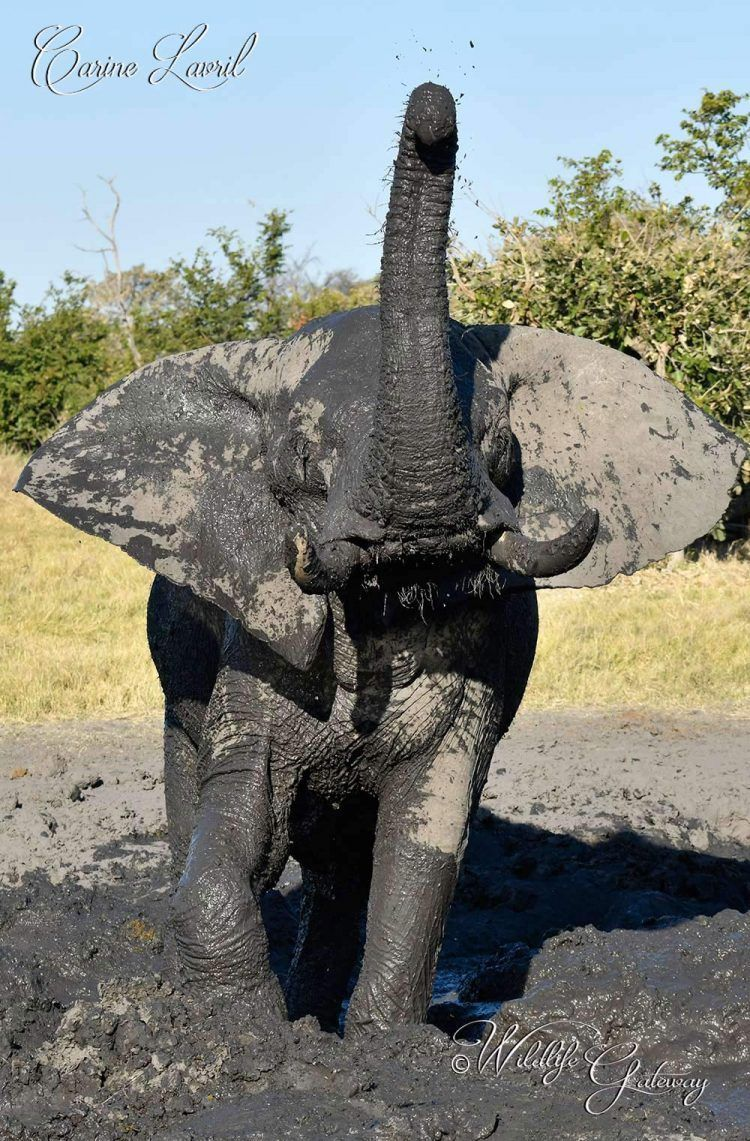 Mud is Fun! Wildlife conservation, Animal species