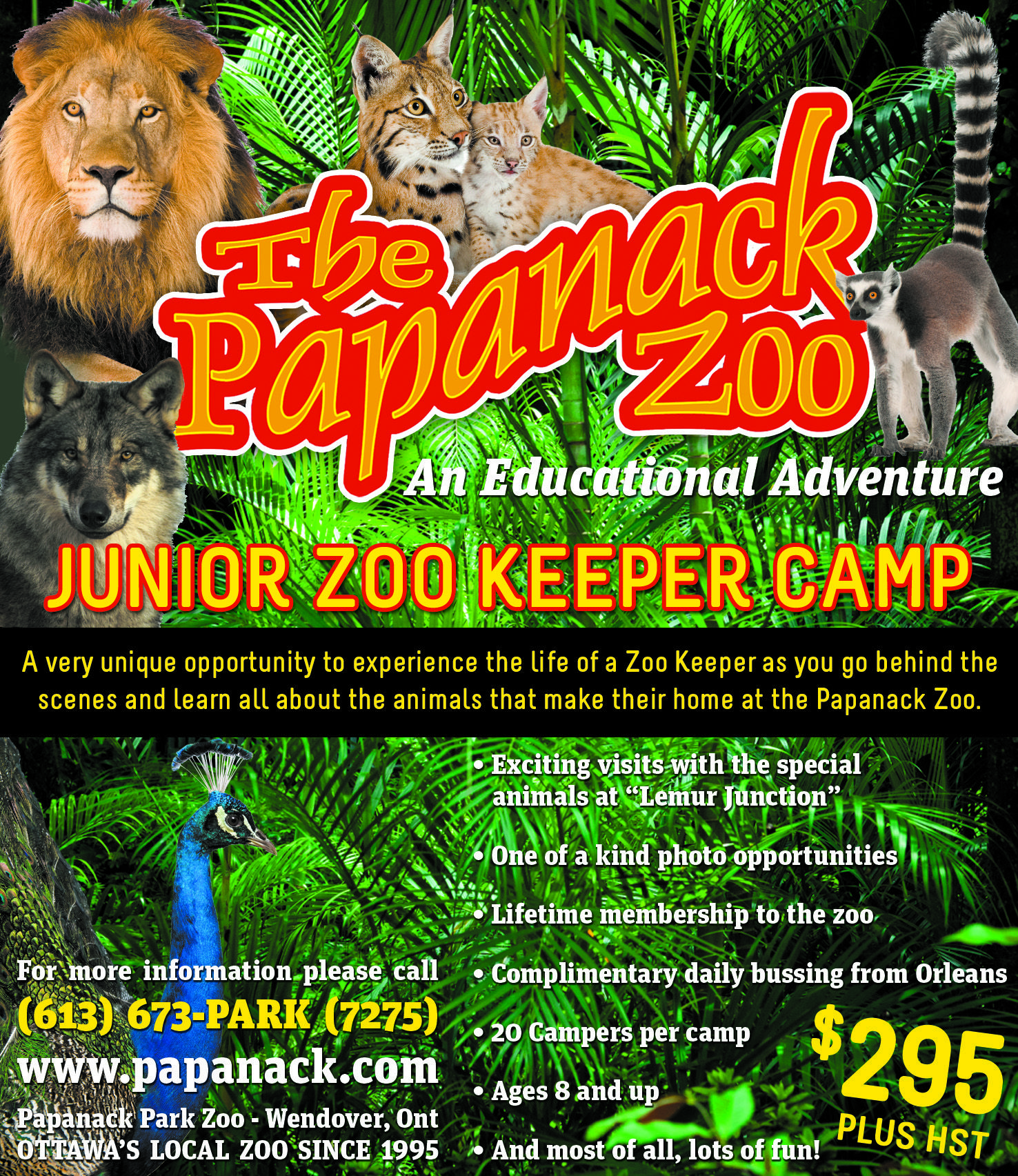 junior zoo keeper camp at papanack zoo papanack park zoo. Black Bedroom Furniture Sets. Home Design Ideas
