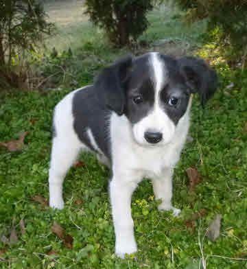 Litter Of 3 Mutt Puppies For Sale In Millersville Md Adn 25288
