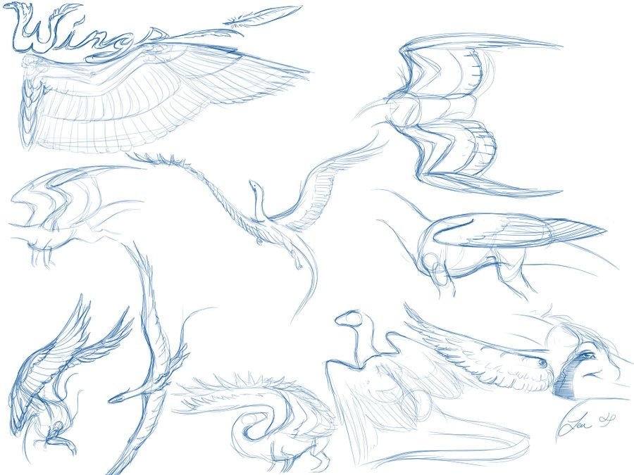 How to draw folded dragon wings | wing study by vibrantechoes.