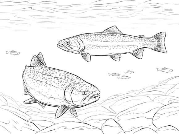 Rainbow Trout Coloring Page Free Printable Coloring Pages Fish Coloring Page Coloring Pages Rainbow Fish Coloring Page