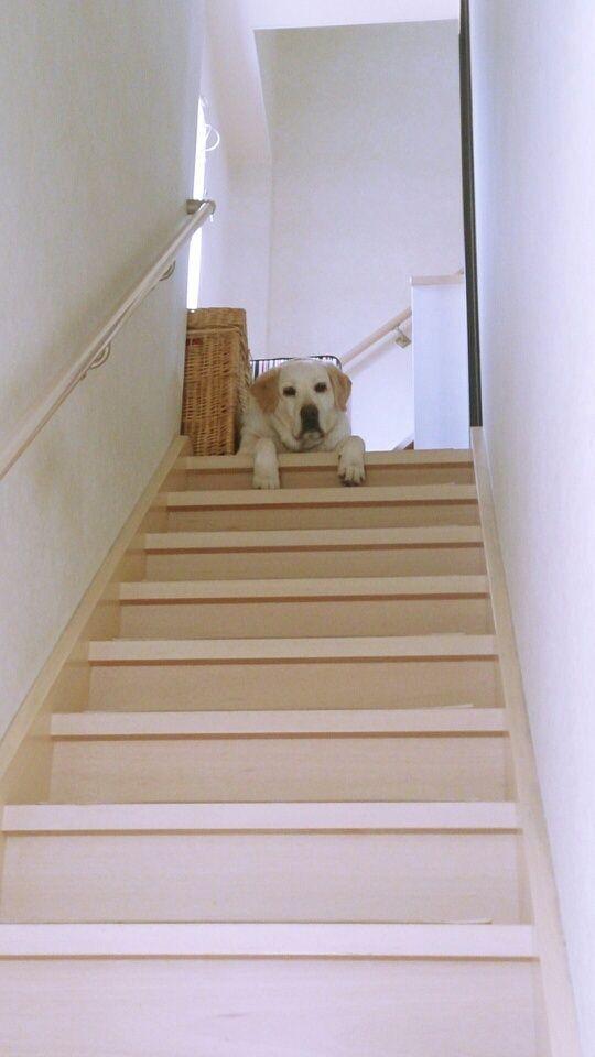 Watchdog?