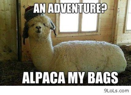 Sheep Quotes Alpaca Funny Funny Puns Alpaca My Bags
