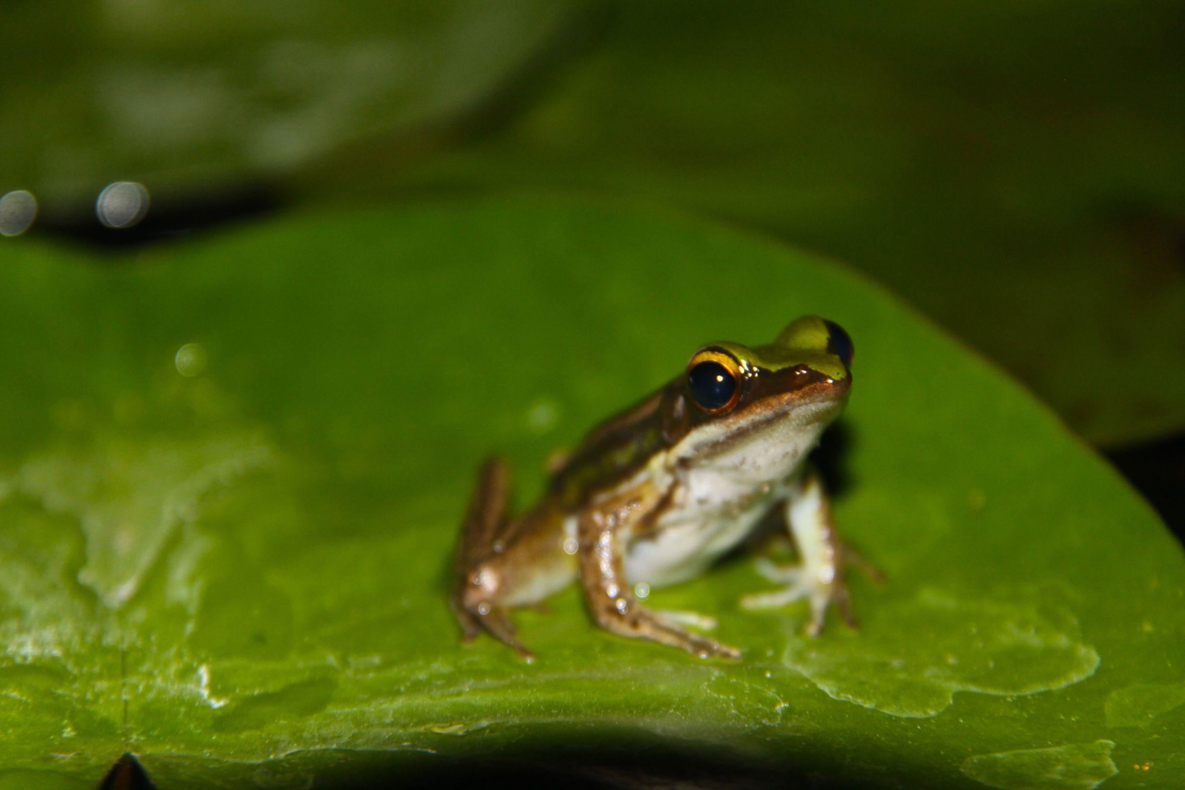 look at me frog