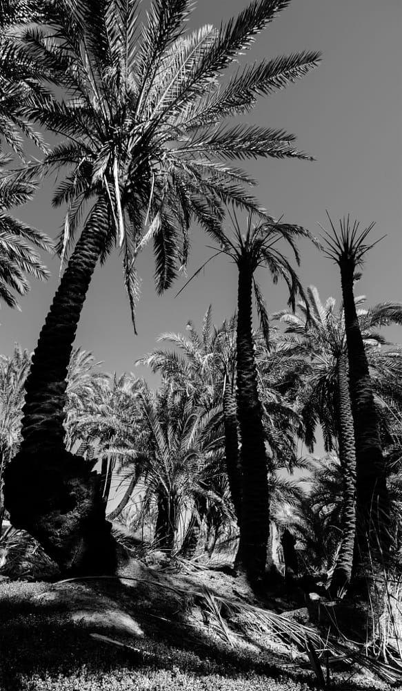 Black Palm نخله سوداء By Gassim Al Harbi On 500px Palm Black Landmarks