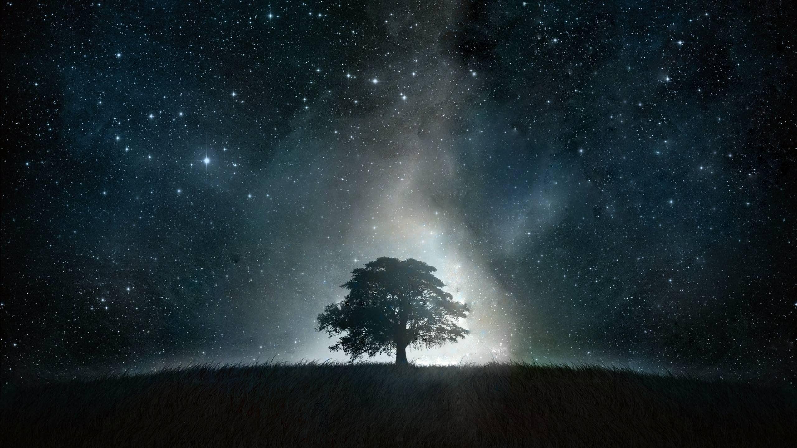 Black Tree Galaxy High Definition Wallpaper Night Sky Wallpaper Beautiful Night Sky Night Skies